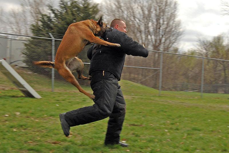 800px-Police_dog_attack.JPG