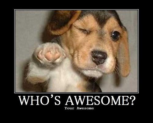 awesome dog.jpg