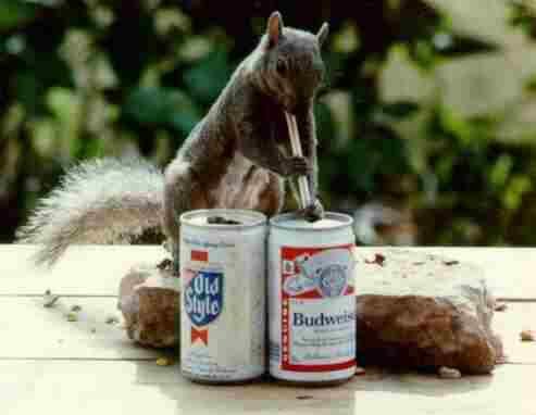 beer_squirel.jpg