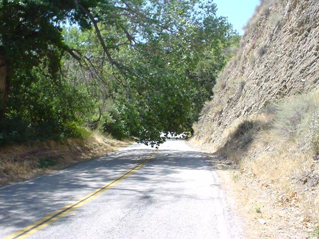 Branch_in_the_road.JPG