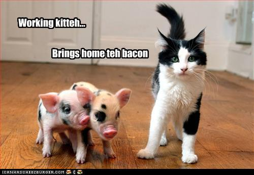 c88c5_funny-pictures-cat-brings-home-bacon.jpg