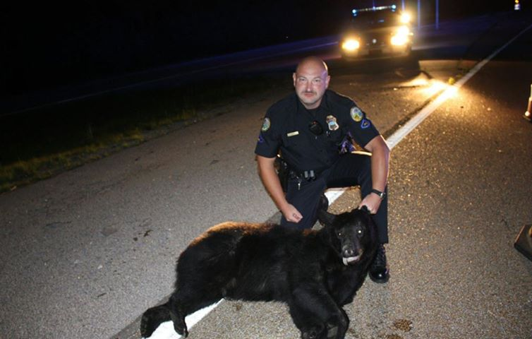 Chattanooga Police Black Bear.jpg