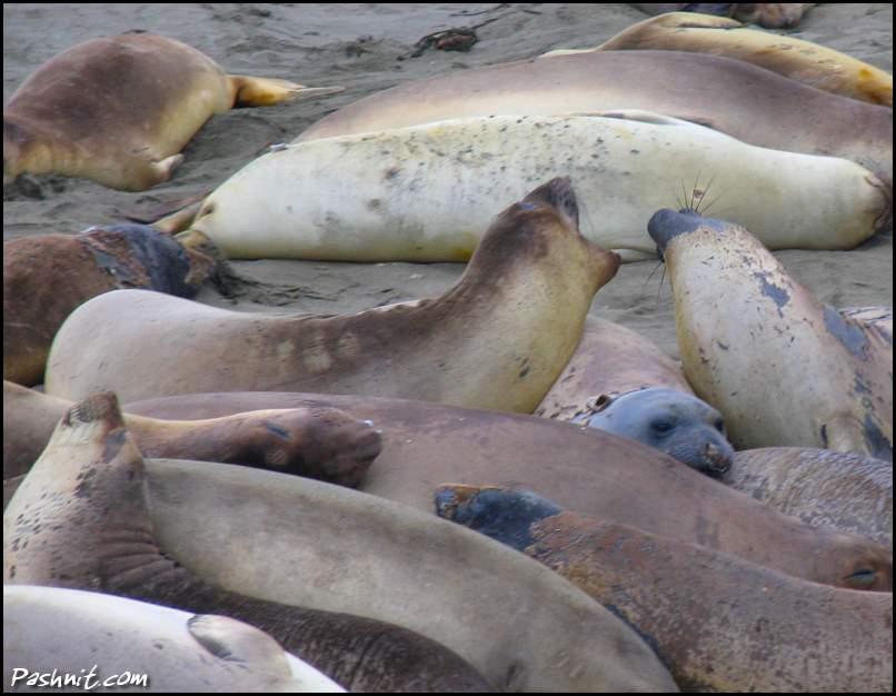 Img_1674-Seals.jpg