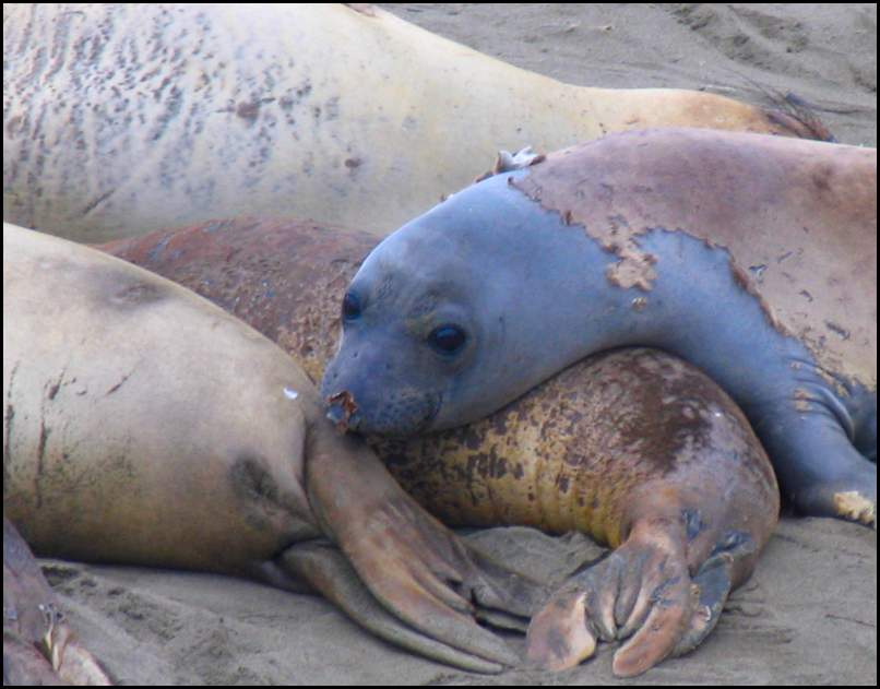 Img_1681-Seals.jpg