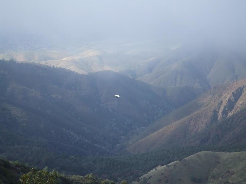 Mt. Diablo dec 08 021.jpg