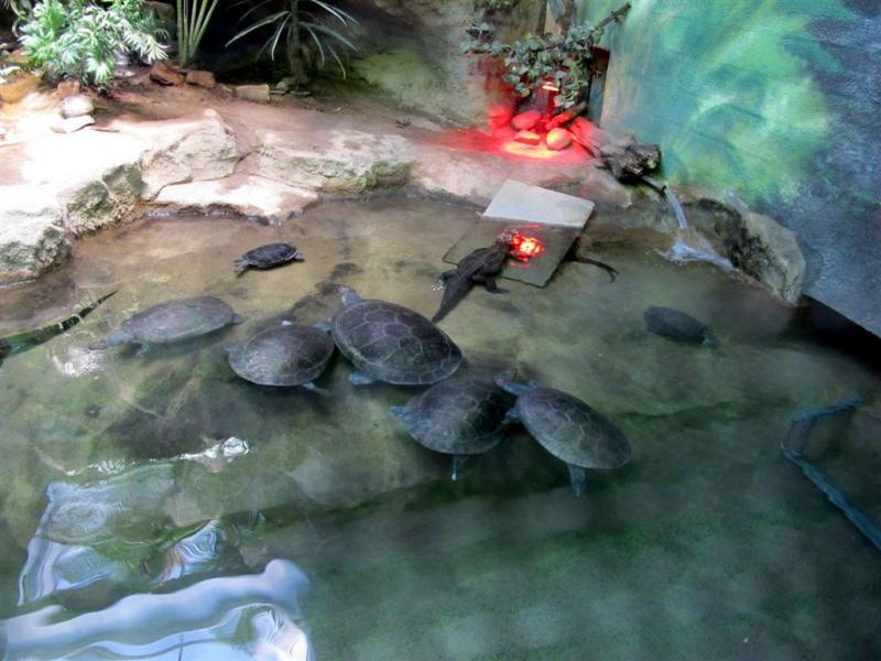 syracuse zoo 011.jpg