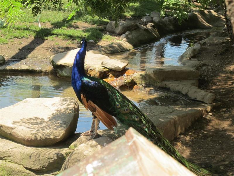 syracuse zoo 036.jpg
