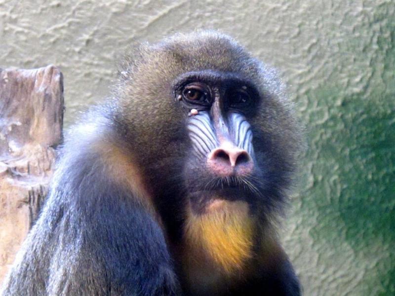 syracuse zoo 055a.jpg