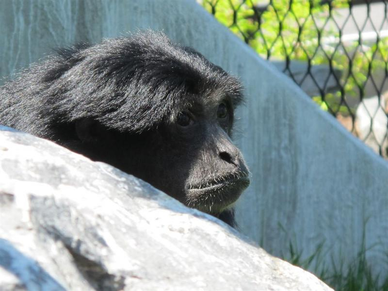 syracuse zoo 075.jpg