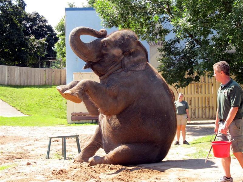 syracuse zoo 111a.jpg
