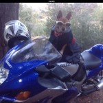Grover is my dog and he loves to ride.